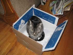 My Aggie in her Disney box.